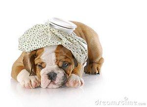 sick-puppy-15330407